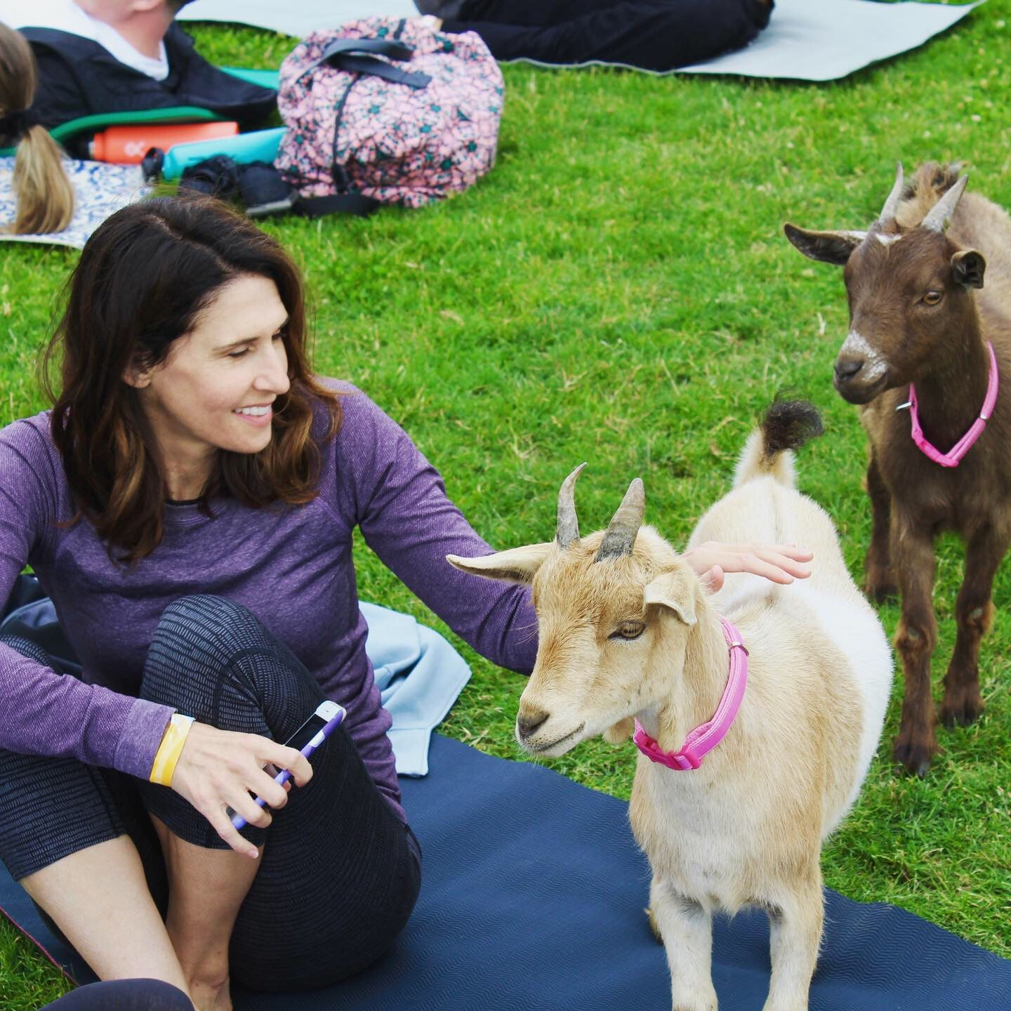 goat yoga review